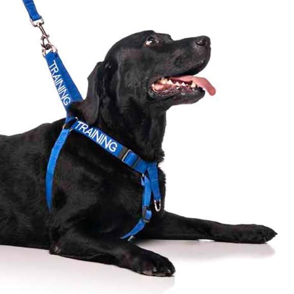 Training Dog Strap Harness