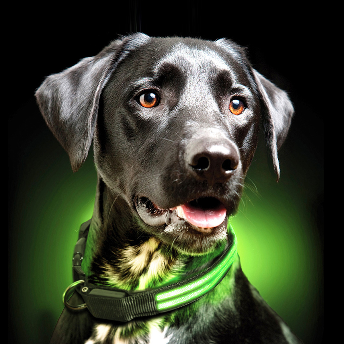 Usb Rechargeable Led Dog Collar Green Dog Collars